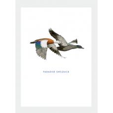 Card - Paradise Shelduck