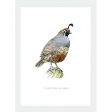 Card - Californian Quail