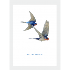 Card - Welcome Swallow