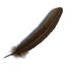 Goose quill, Brown